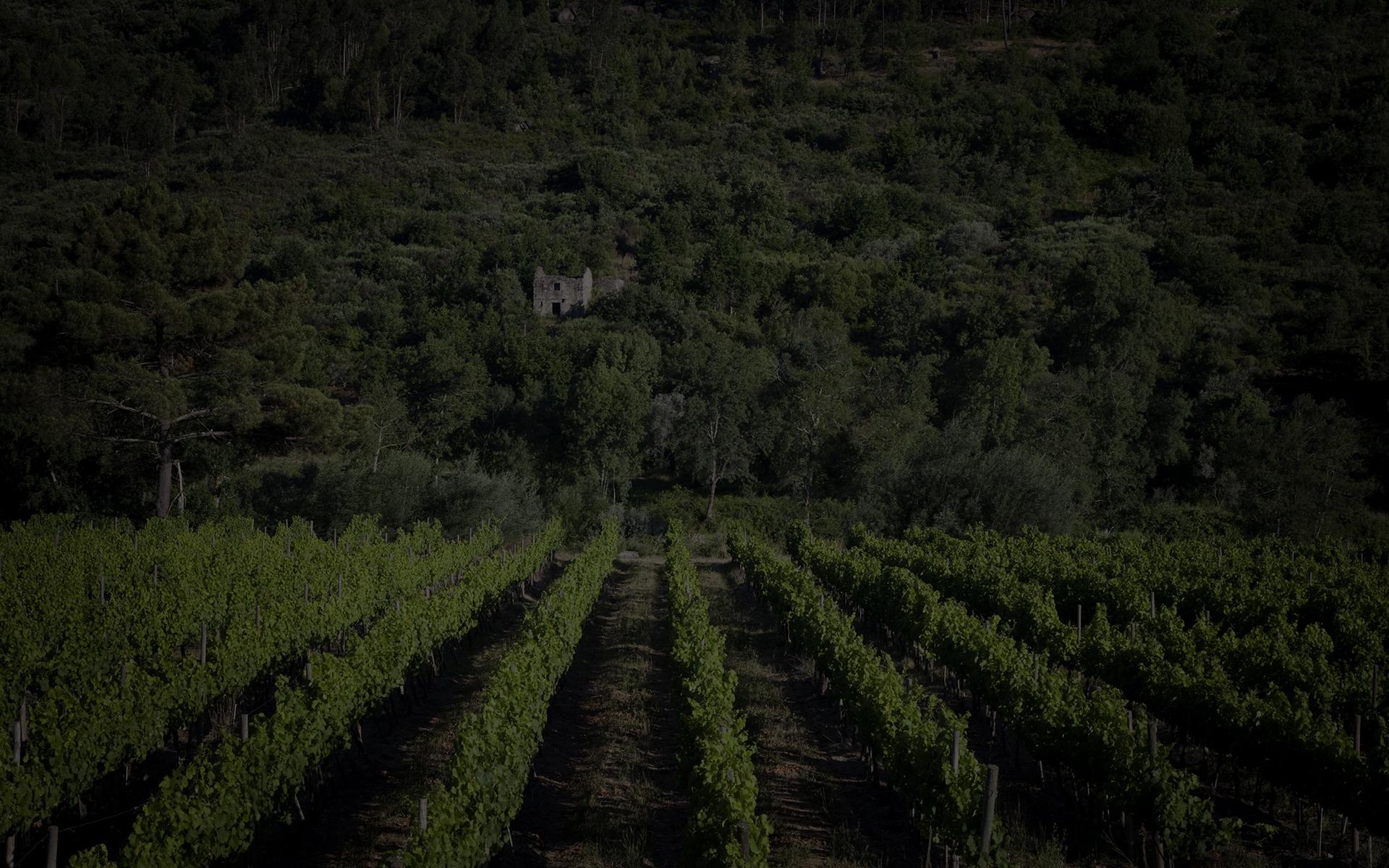 Quinta do Mondego